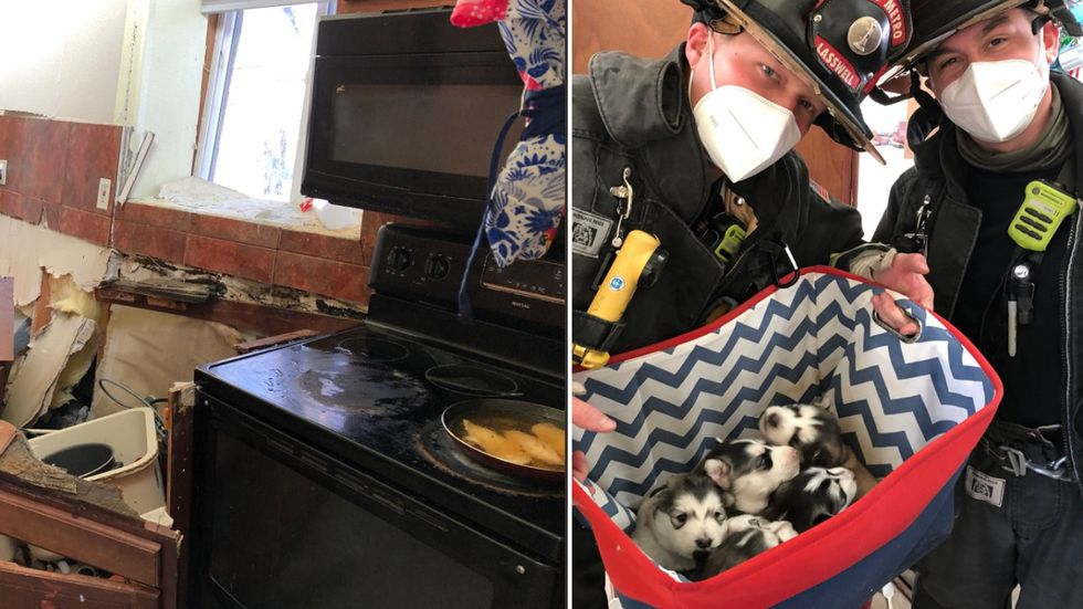 Car hits someone's kitchen in Colorado, firefighters retrieve husky puppies from inside