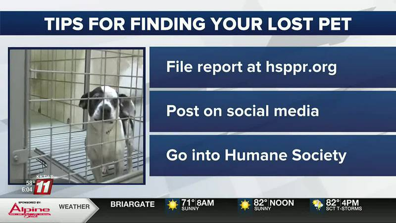 What to do if your pet ran away or you find a stray
