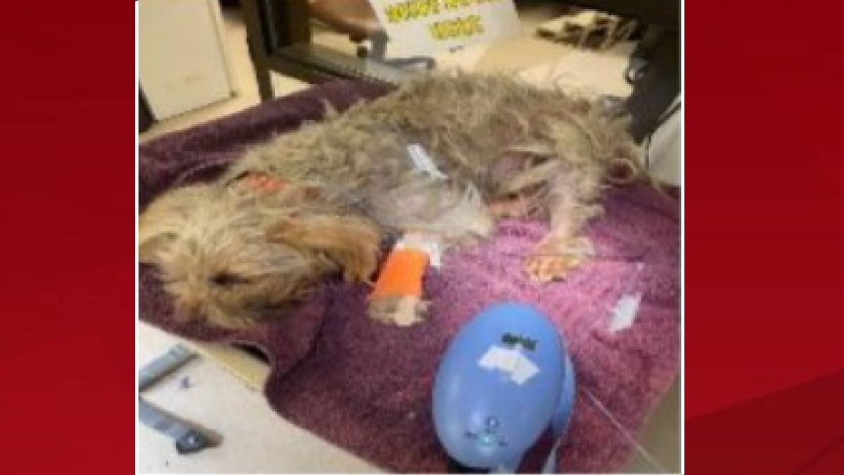 An animal cruelty/neglect case was opened after a dog was found clinging to life.