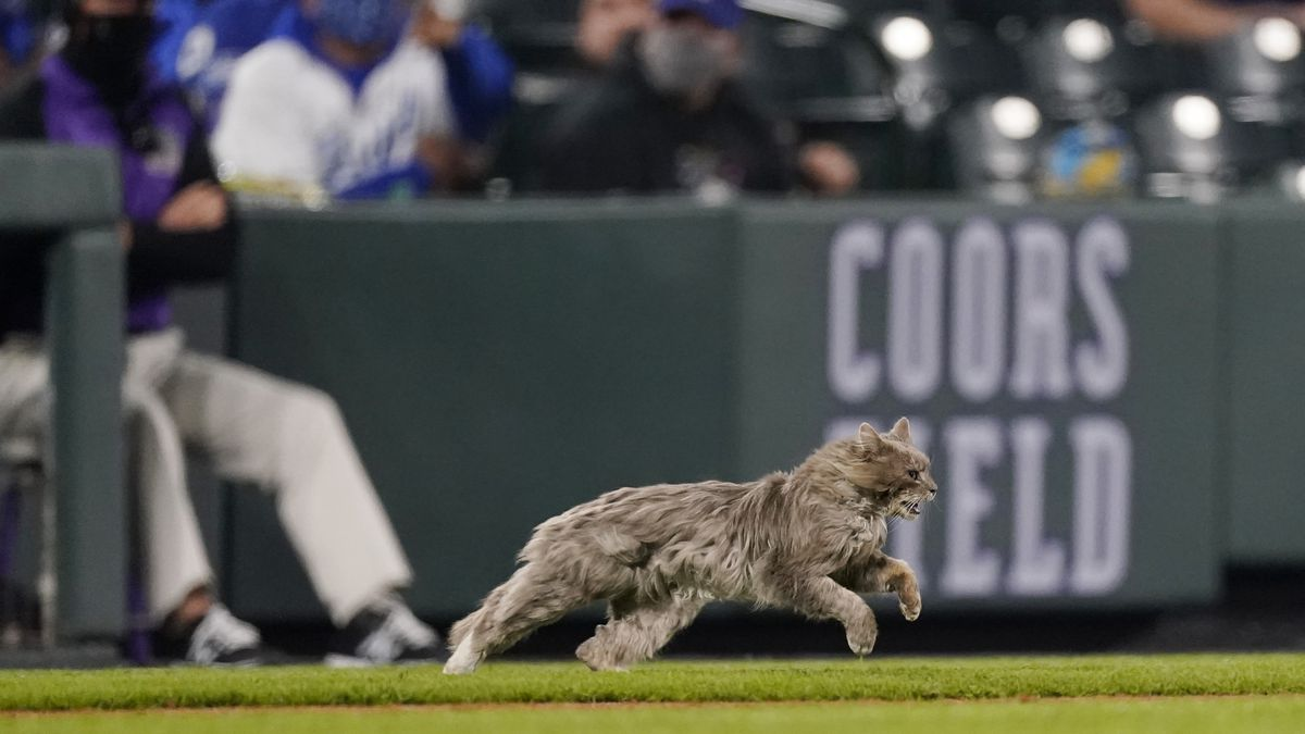 A cat runs on to the field while Colorado Rockies' Ryan McMahon faces Los Angeles Dodgers...