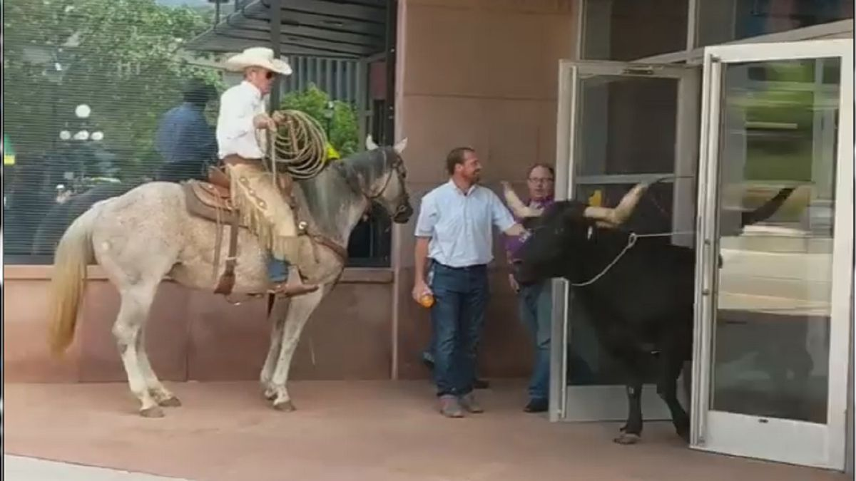 A longhorn escaped a cattle drive in downtown Colorado Springs on Aug. 2, 2019.  Amber Keller...