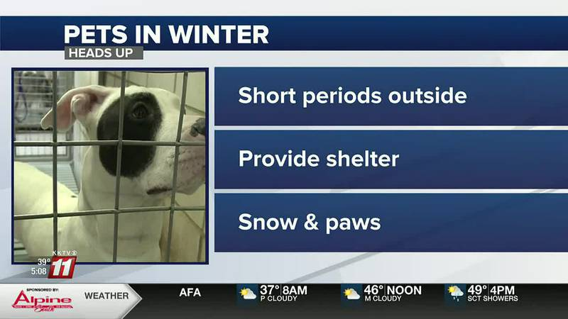 """""""It could be life or death,"""" Important reminders for pet owners as we enter winter"""