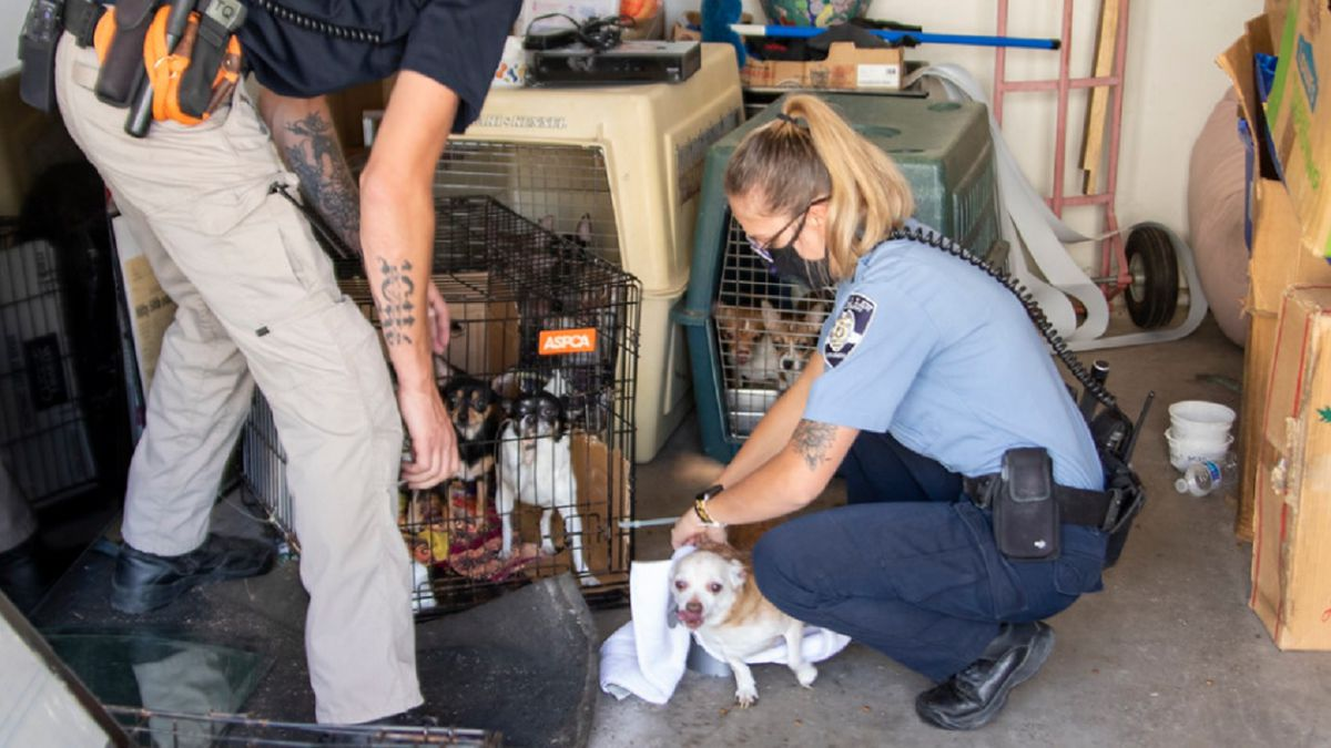 26 dogs were rescued on 9/23/20 according to HSPPR. Photo courtesy @SarahMatulaPhotography