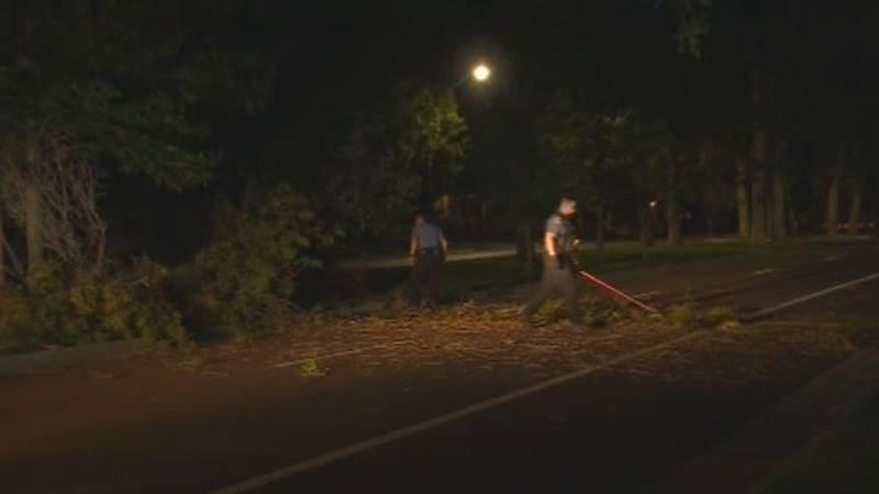 Tree fell over on Nevada Avenue