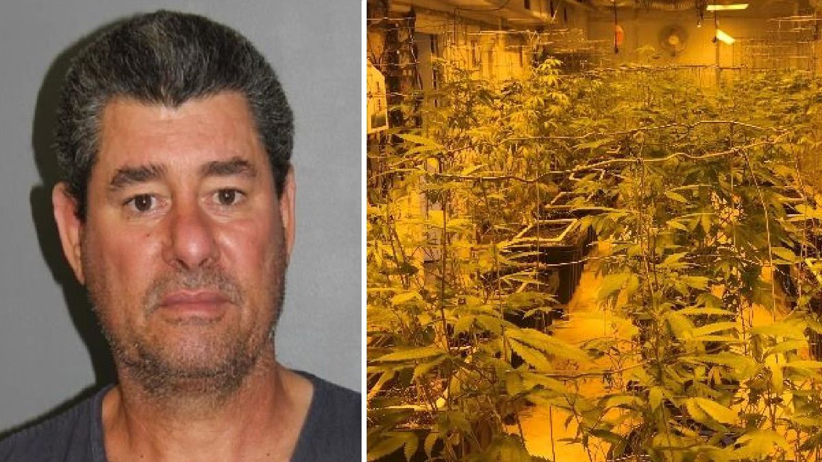 Suspect Jorge Perez and illegal marijuana grow.