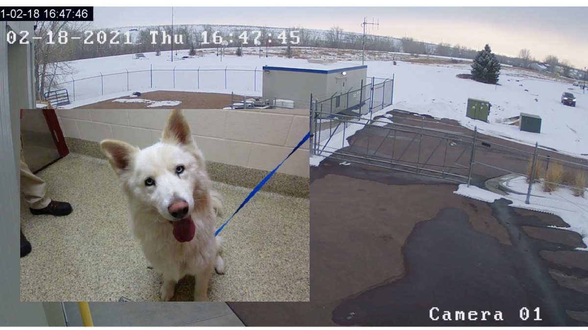 The Humane Society of the Pikes Peak Region (HSPPR) needs your help identifying the suspect who...