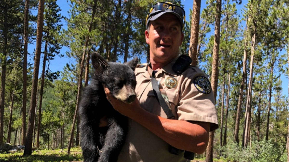 Two cubs were rescued by wildlife officers after their mother was hit by a car.  Photo courtesy: CPW