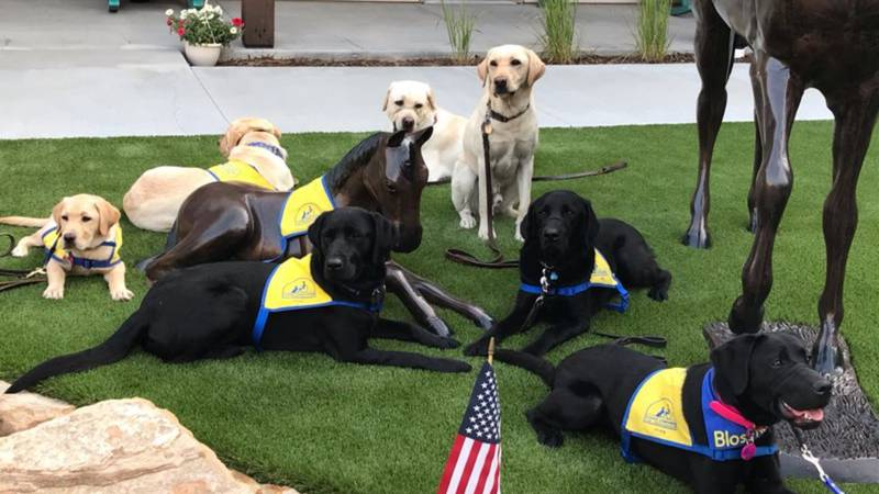 Canine Companions were able to have a training day with eight dogs in the community courtyard...