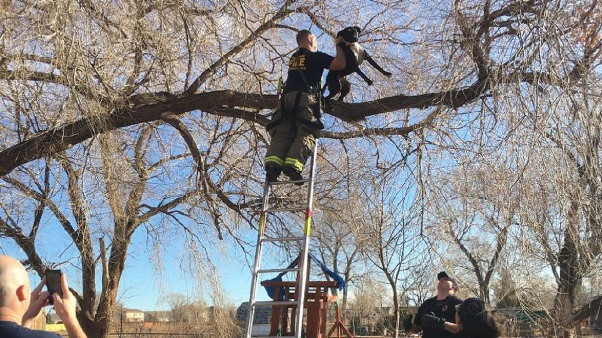 A dog got stuck in a tree chasing after a squirrel in Colorado.  Firefighters came to the...