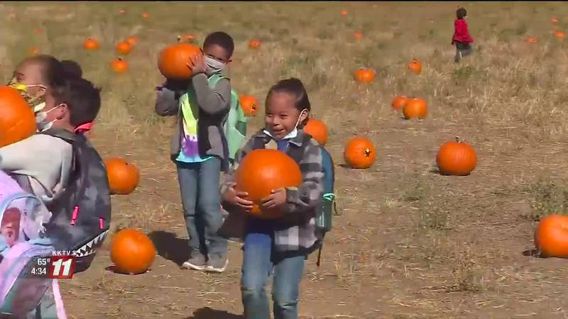 Last year, Venetucci Farm was unable to host kindergarten classes due to the Covid pandemic.