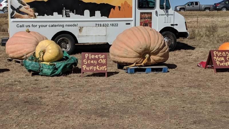 Giant Pumpkins in Colorado (2019)