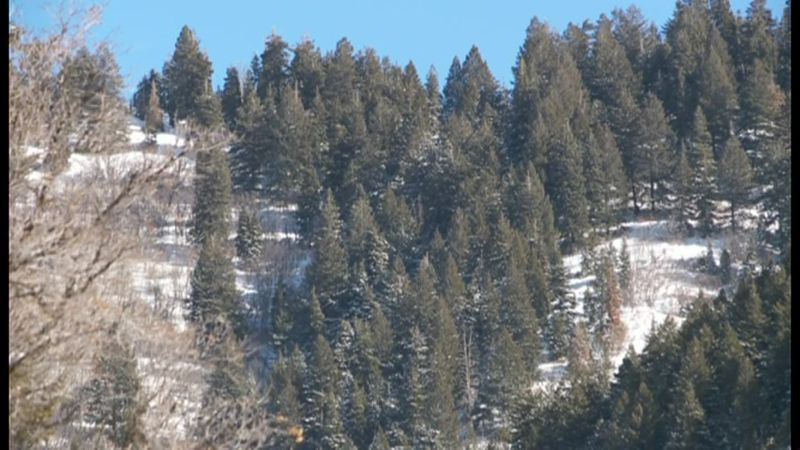 An avalanche killed four skiers and injured four others Saturday in a popular recreation area,...